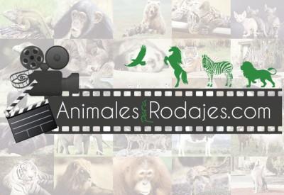 animales-para-rodajes-2