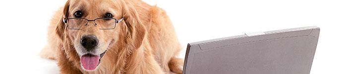 perro con gafas y un portatil